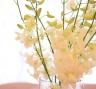 Лимонная свадьба - живые цветы